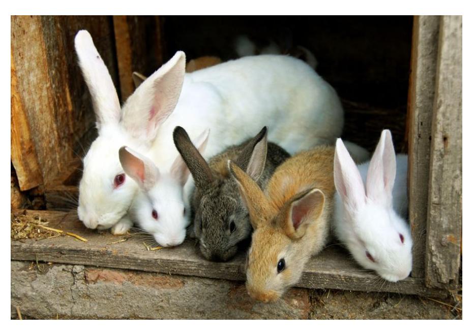 Aké sú najčastejšie ochorenia králikov?