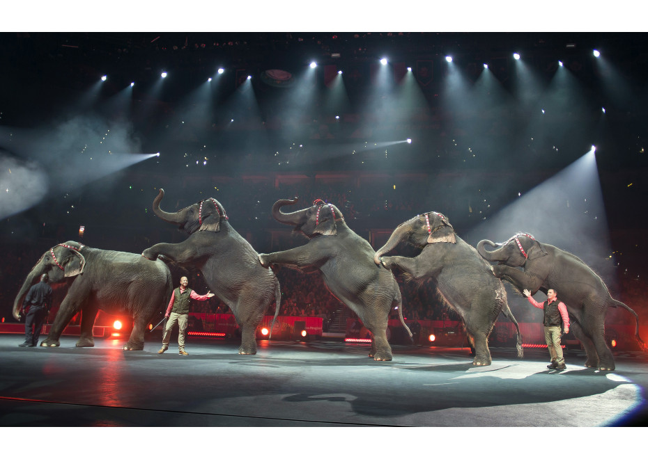 Od 1. novembra sa má skončiť utrpenie zvierat v cirkusoch