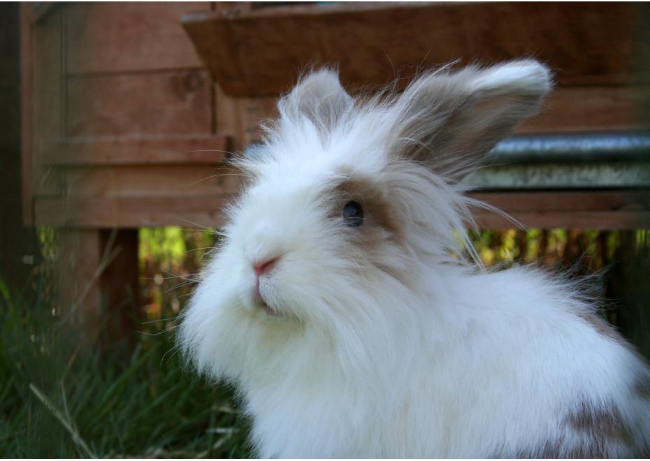 Teddy králiky a zooterapia