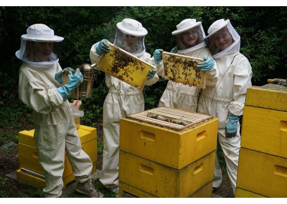 Finančná pomoc pre včelárov