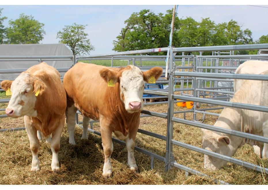 Štátna pomoc na likvidáciu uhynutých hospodárskych zvierat