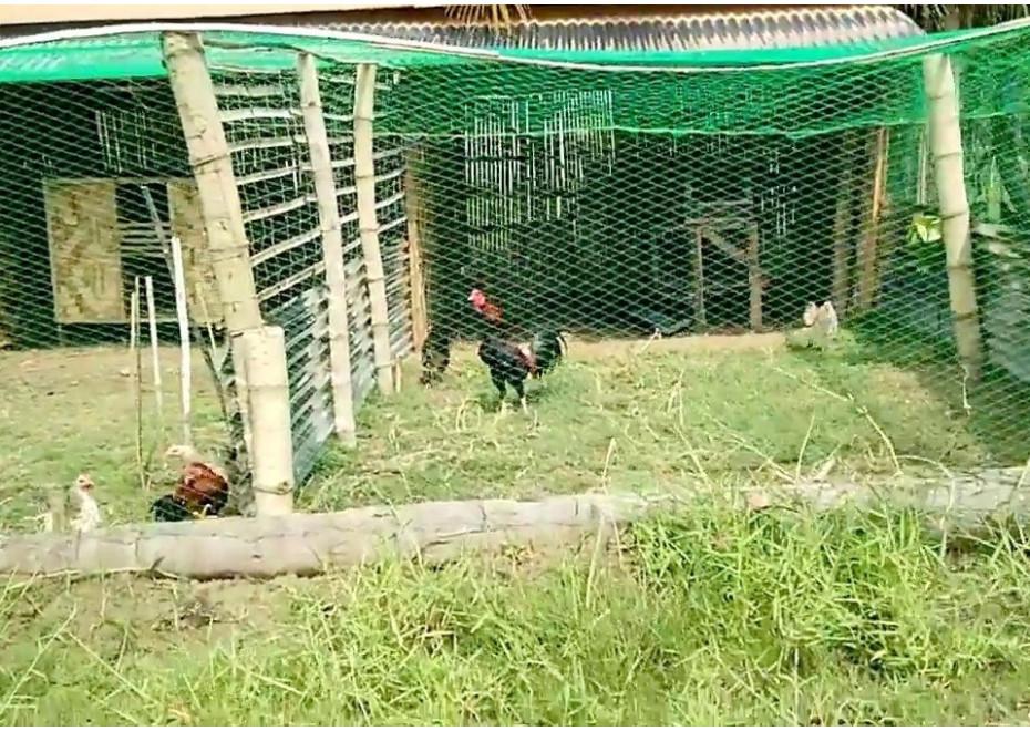 Siete na ochranu sliepok pred dravcami i pred vtáčou chrípkou