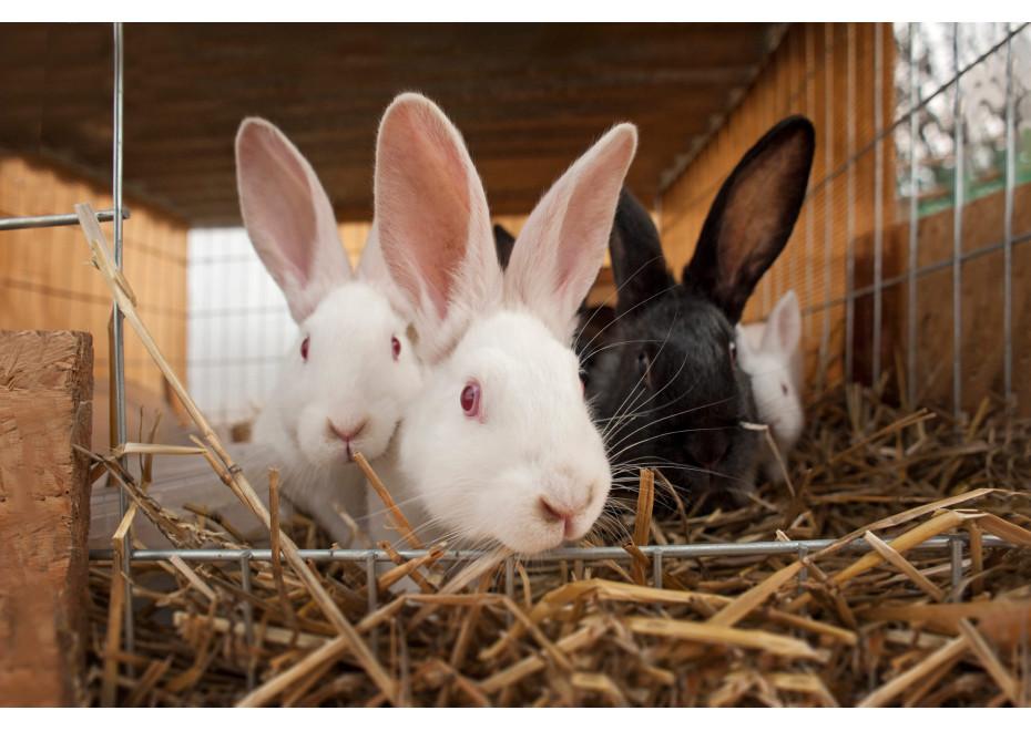 Chov králikov pre začiatočníkov