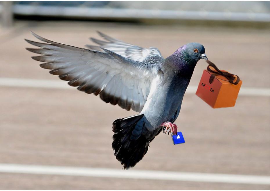 Čo tak chovať poštové holuby?