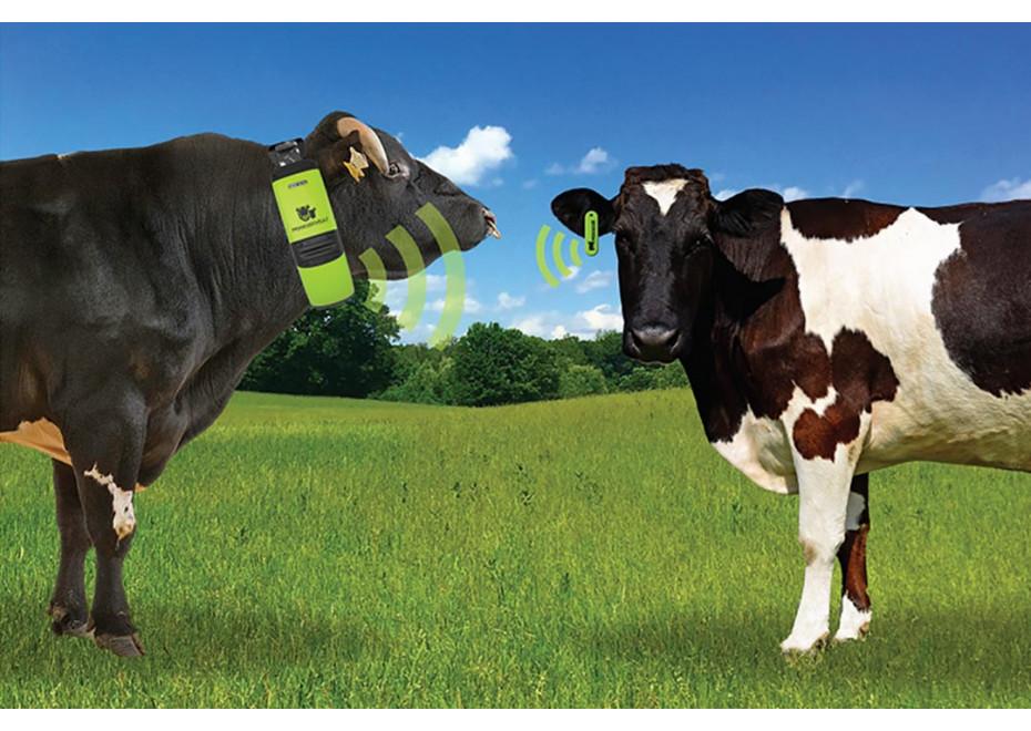 Senzory detekcie ruje a telenia kráv