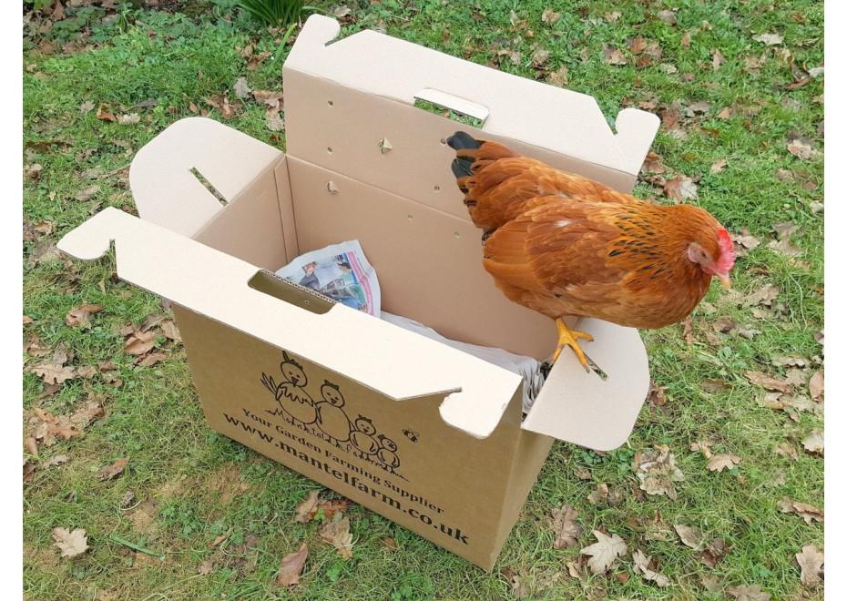 Na cestu so sliepkami sa treba pripraviť
