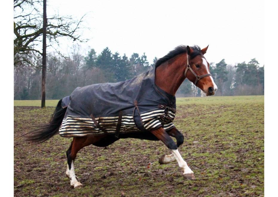 Ako kone zvládajú zimu, blato a dážď?