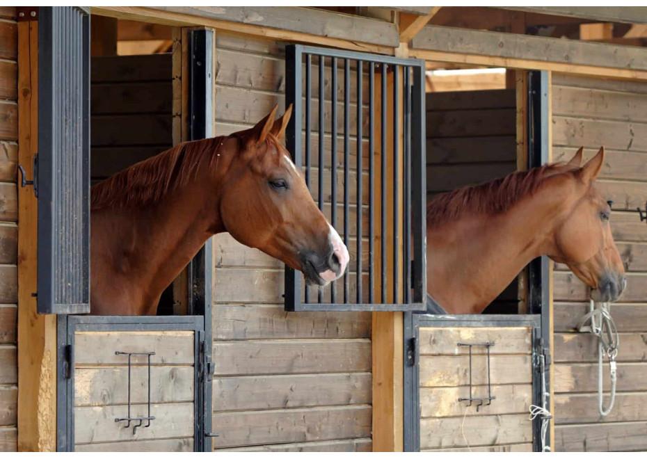 Ako správne ustajniť kone?