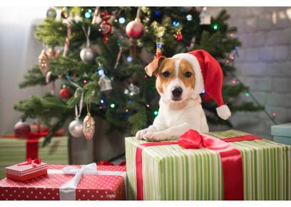 Šteniatko pod vianočný stromček?