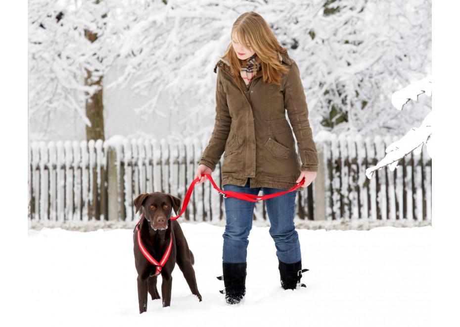 V zime treba chrániť aj psov