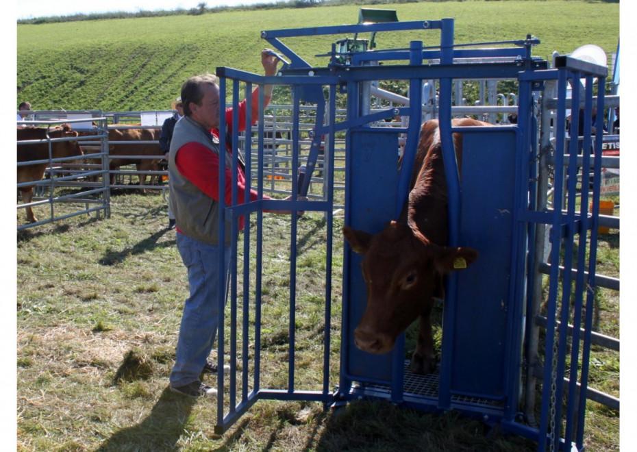 Fixácia dobytka