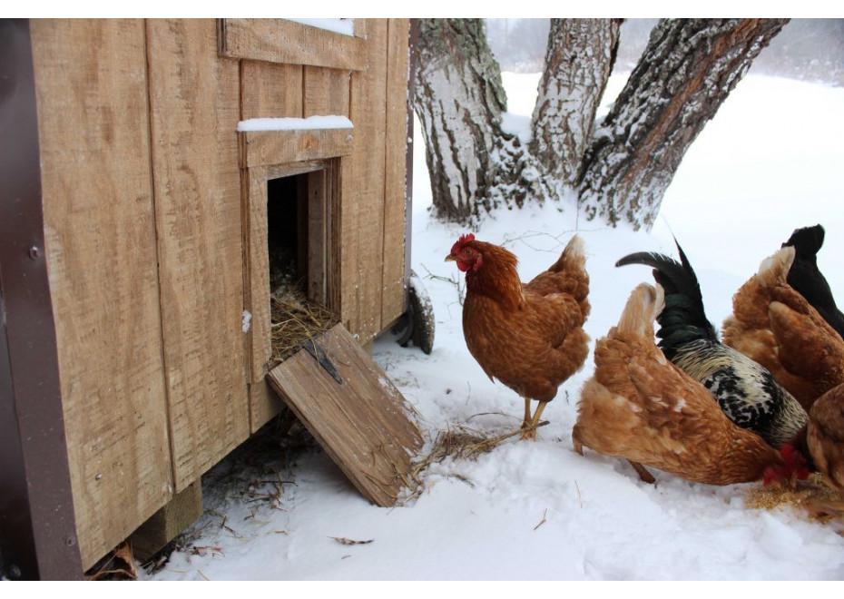 V hniezde sú vajcia so zamrznutým obsahom