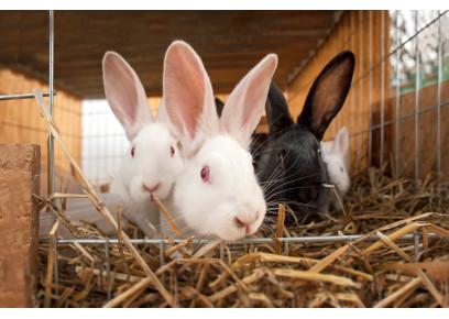 Čo to znamená, keď králik kýcha? (II.)