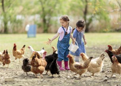 Ktoré sliepky sú vhodné ku deťom?