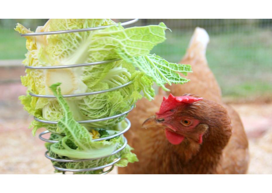 Ako možno ušetriť na krmive pre sliepky?