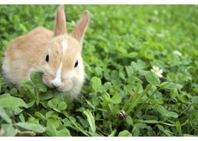 Ekologický chov králikov