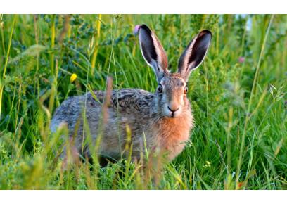 Je možné chovať zajace v klietke?